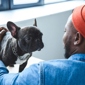 Pets in the Office: What's the Best Policy?